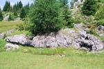 Priroda na Kamenoj Gori 50