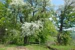 Proleće na Kamenoj Gori 9