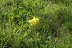 Proleće na Kamenoj Gori 14