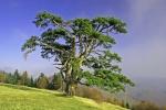 Sveti bor na Kamenoj Gori 8