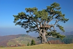 Sveti bor na Kamenoj Gori 9