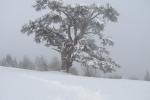 Zima na Kamenoj Gori 15