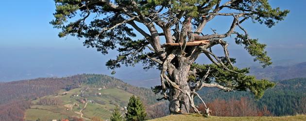 turizam-srbija-kamena-gora