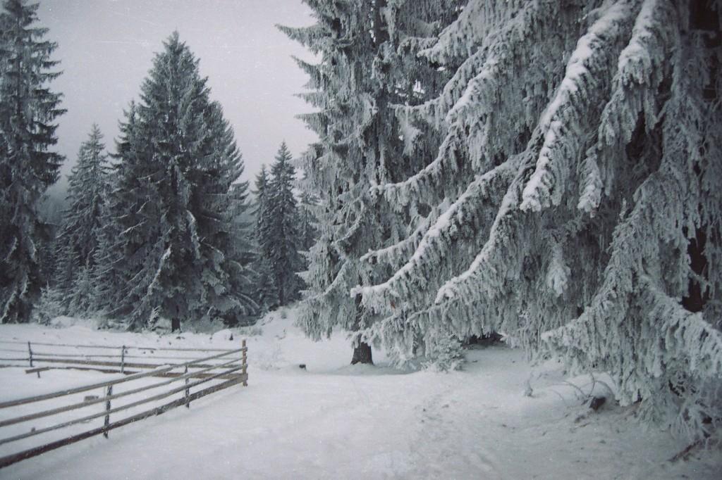Zima na planini Kamena Gora.