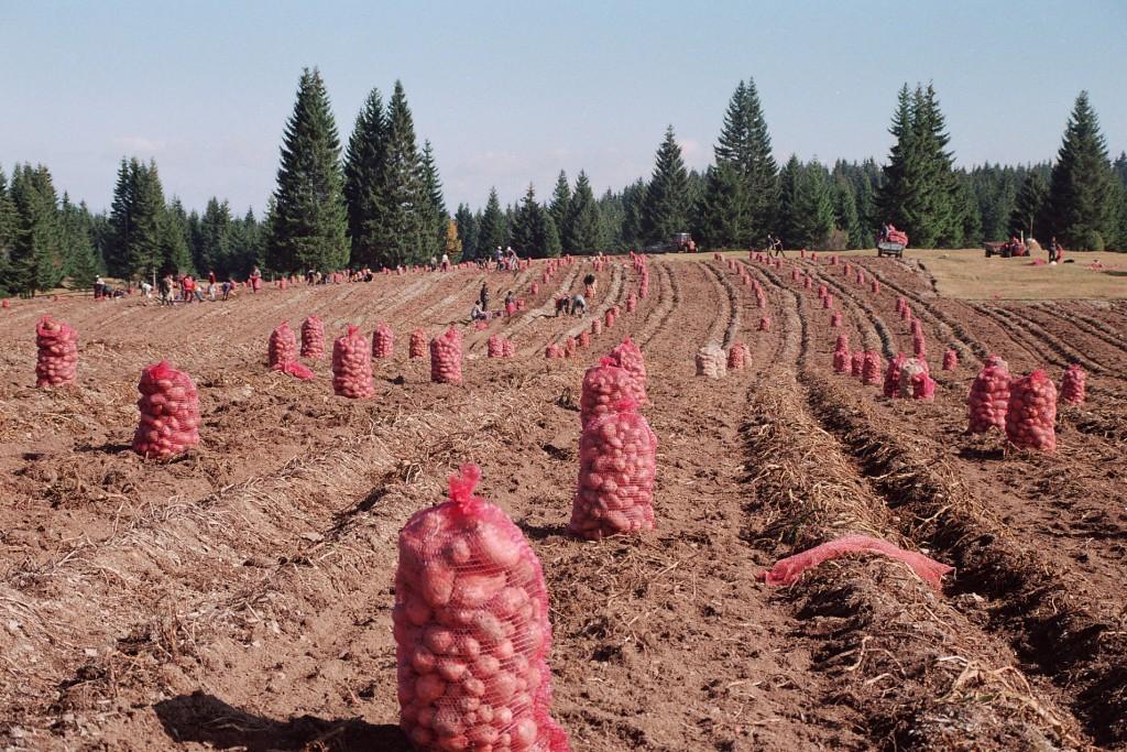 Ekološka i zdrava hrana izvor su vitalnosti kod Kamenogoraca, koji su spremni da to podele sa svojim poisetiocima.