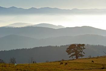 kamena gora jutarnja magla