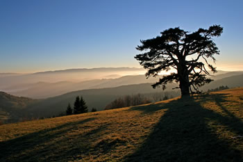 kamena gora sveto drvo