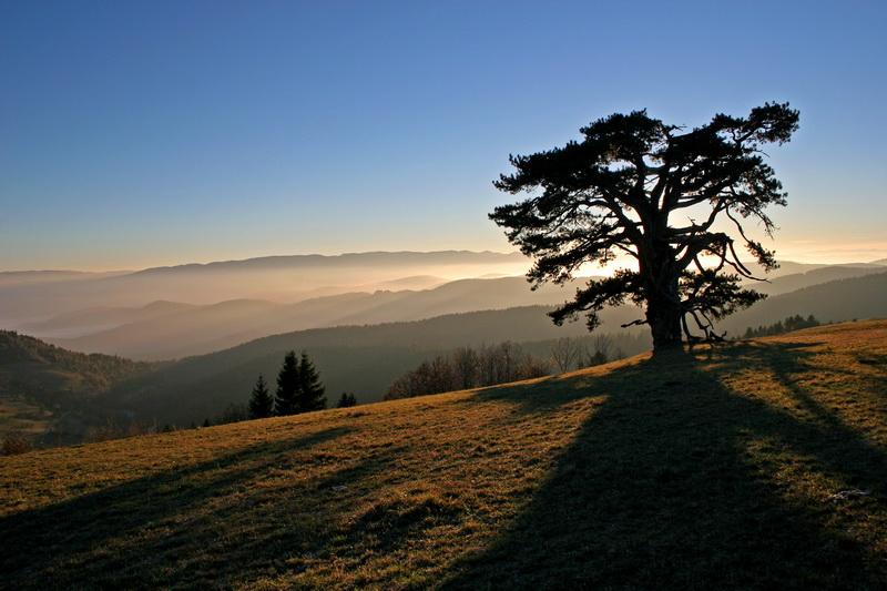 Sveti bor čuva planinu Kamena Gora.