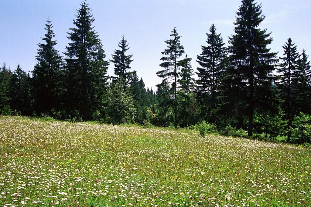 Šuma na Kamenoj Gori.
