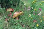Priroda na Kamenoj Gori 48