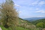 Proleće na Kamenoj Gori 18