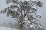 Zima na Kamenoj Gori 25