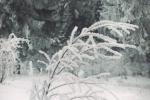 Zima na Kamenoj Gori 8