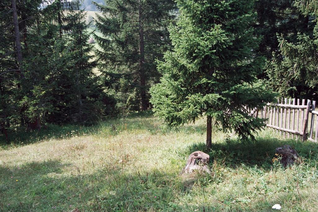 Četinarske šume koje okružuju seoske kuće, stvaraju pravu čaroliju na Kamenoj Gori.