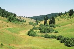Priroda na Kamenoj Gori.