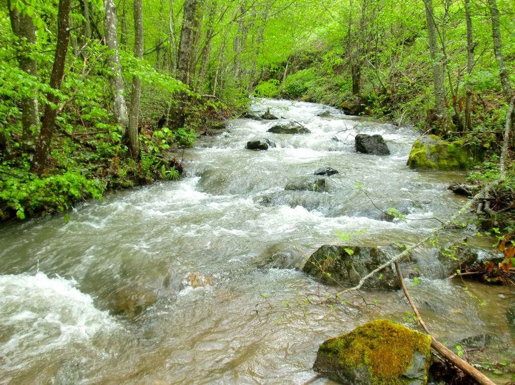 Bogatstvo prirode na planini u Srbiji.