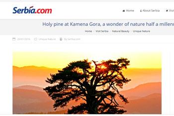 Kamena Gora - Holy pine